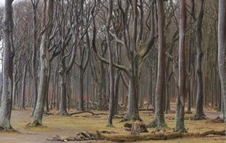 Wald 27